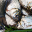 Several river crucian on the grass — Stock Photo