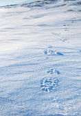 Traces of boots on snow — Stock Photo