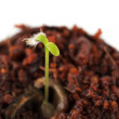 Green sprout growing from seed — Stock Photo #23332460