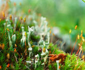 Moss in a shady forest. — Stock Photo