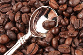 Brown roasted coffee bean and tea spoon — Stock Photo
