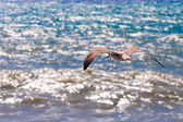 Seagull flying over the sea. — Stockfoto
