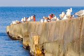 防波堤にカモメの群れ. — ストック写真