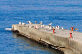 A flock of seagulls on the breakwater. — Zdjęcie stockowe