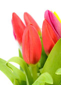 Buquê de tulipas coloridas. — Foto Stock