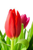 Bouquet of colorful tulips. — Stock Photo