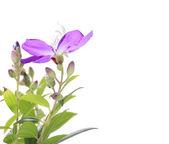 Flower design — Stockfoto