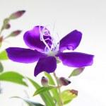 Beautiful flower — Stock Photo #17170707