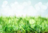 Fundo de natureza com grama no prado — Foto Stock