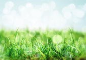 Nature background with grass in the meadow — Stock Photo
