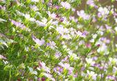 Beautiful flower design — Stock Photo