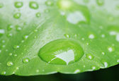 Water drops on leaves — Stock Photo