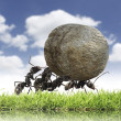 Team of ants rolls stone uphill — Stockfoto