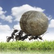 Team of ants rolls stone uphill - Stock Photo