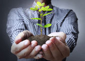 Plant in hand — Stock Photo