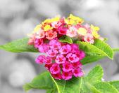 Flower background design — Stock Photo