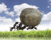 Team of ants rolls stone uphill — ストック写真