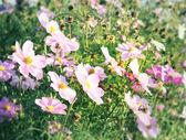 Kwiat tło projektu — Zdjęcie stockowe