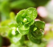 Foglia verde e la goccia d'acqua — Foto Stock