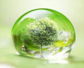 Tree in water drop — Stock Photo