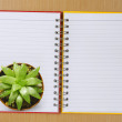 Top view of Cactus on the Booklet — Stock Photo