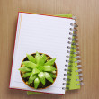 Top view of Cactus on the Booklet — Stock Photo #35153707