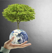 Earth globe and tree in his hand — Stock Photo