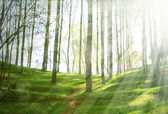 Spring nature background with sun beam — Stock Photo