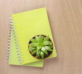 Top view of a Cactus on Booklet  — Stock Photo
