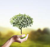 Küçük ağaç, bitki içinde el — Stok fotoğraf