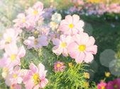 Piękne kwiaty pole — Zdjęcie stockowe