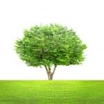 Green tree — Stock Photo #44786857