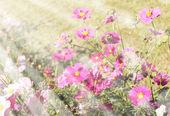 Beautiful flowers field  — Stock Photo