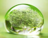 Tree in water drop  — Stock Photo