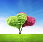 Tree in shape of heart — Stockfoto