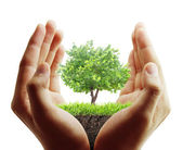 tree, plant in the hand  — Foto de Stock