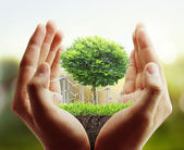 tree, plant in the hand  — Stock Photo