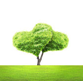 Tree in shape of heart — Stock Photo
