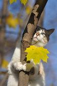 Chat sur l'arbre en automne — Photo