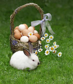 Easter basket and the Easter bunny — Stock Photo