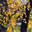 Autumn leaves — Stock Photo #35014473