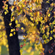 Autumn leaves — Stock Photo #35014519