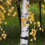 Autumn leaves  — Stock Photo #35073451
