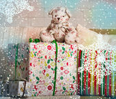 Cute teddy bear with gifts — Stock Photo