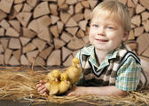 Boy and three little yellow ducklings — Stock Photo