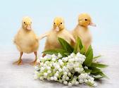 Wielkanoc kaczątka — Zdjęcie stockowe