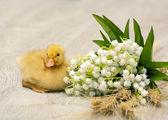 Wielkanoc kaczątko — Zdjęcie stockowe