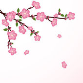Cherry tree flower — Stock Vector