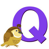 Animal alphabet Q — Stock Vector