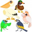 Five colorful cute birds with white background — Stock vektor